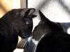 rozmowa kocia